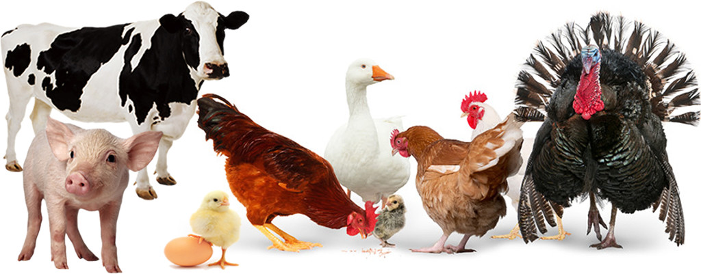 img-poultry